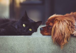 Cozy mystery cats | cozy mystery dogs | cozy mysteries with cats | cozy mysteries with dogs | cozy mysteries with pets